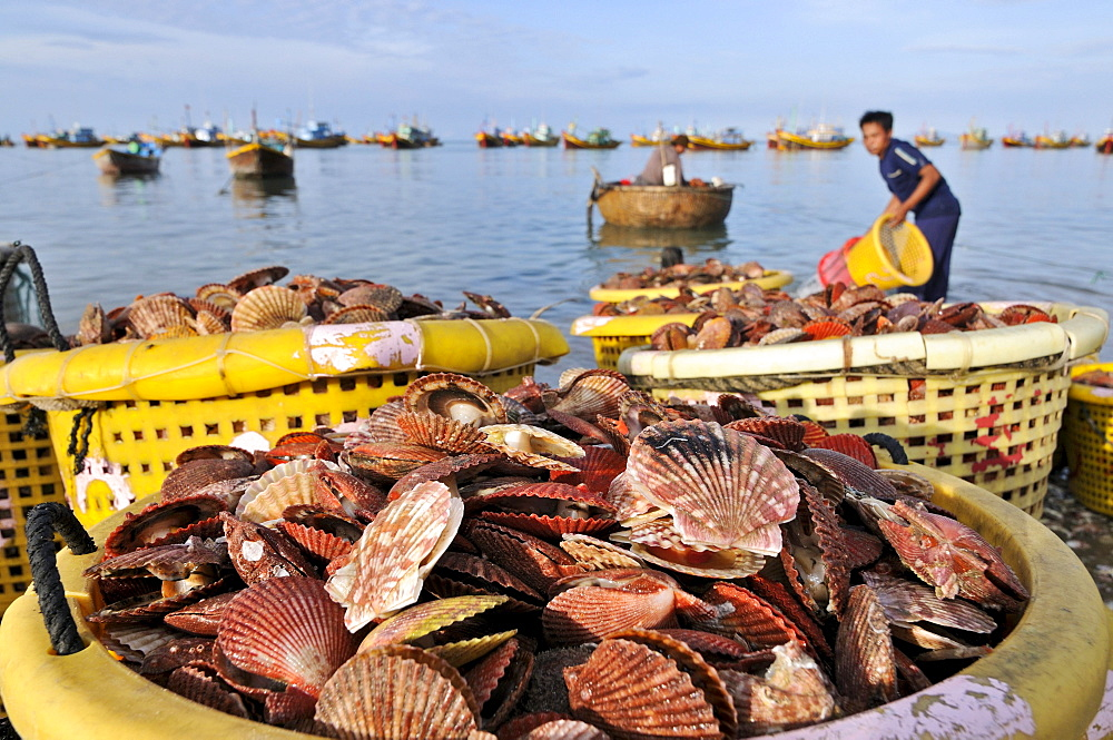 Scallop shells in a basket in front of fishing boats and fishermen on the water, Mui Ne, Vietnam, Asia
