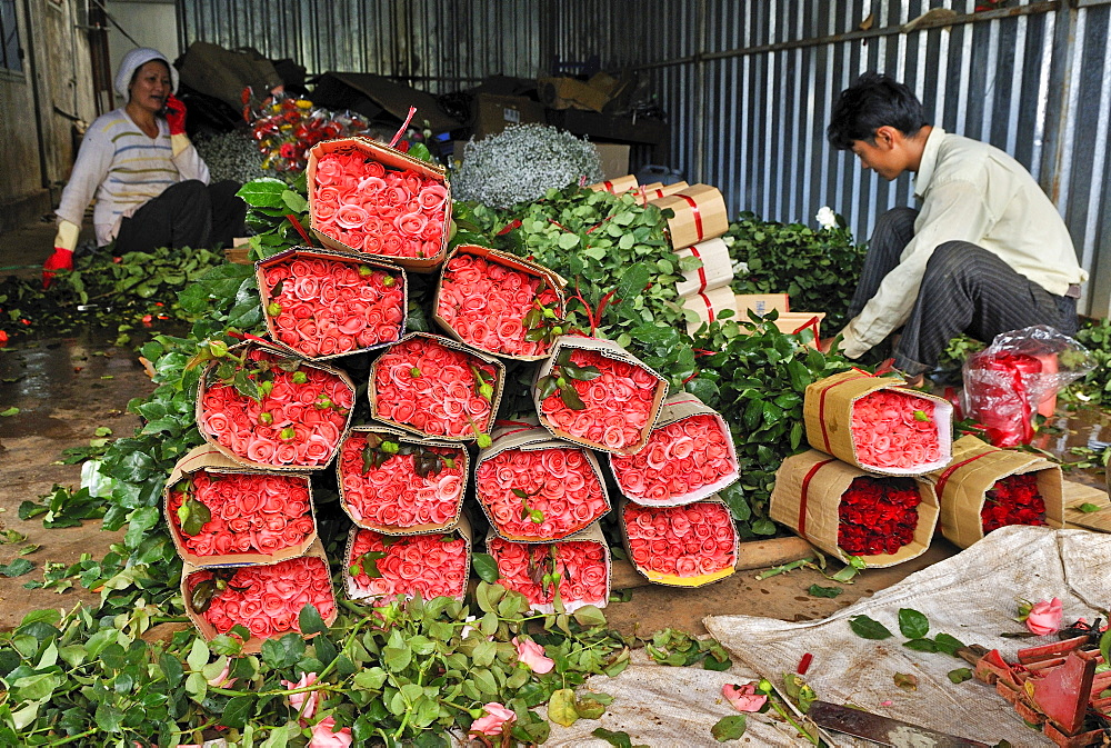 Stacks of roses and two workers, man, woman, in a rose-growing factory, Dalat, Central Highlands, Vietnam, Asia