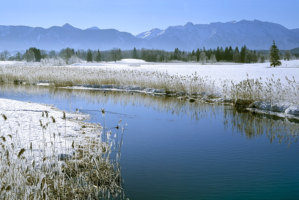 Staffelsee Ache lake in Uffing, winter, moss, Estergebirge mountains, Upper Bavaria, Bavaria, Germany, Europe