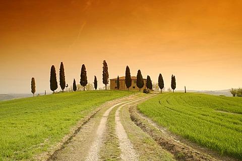 Evening mood, farm near Pienza, row of cypress trees, Tuscany, Italy, Europe