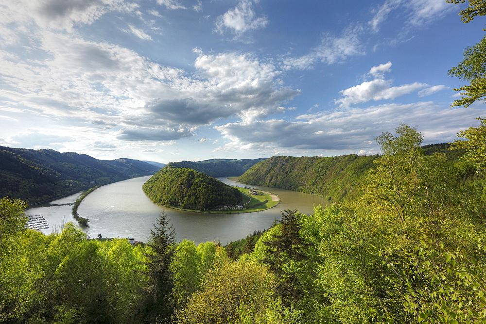 Danube River, Schloegener loop, Schloegen, Upper Austria, Austria, Europe