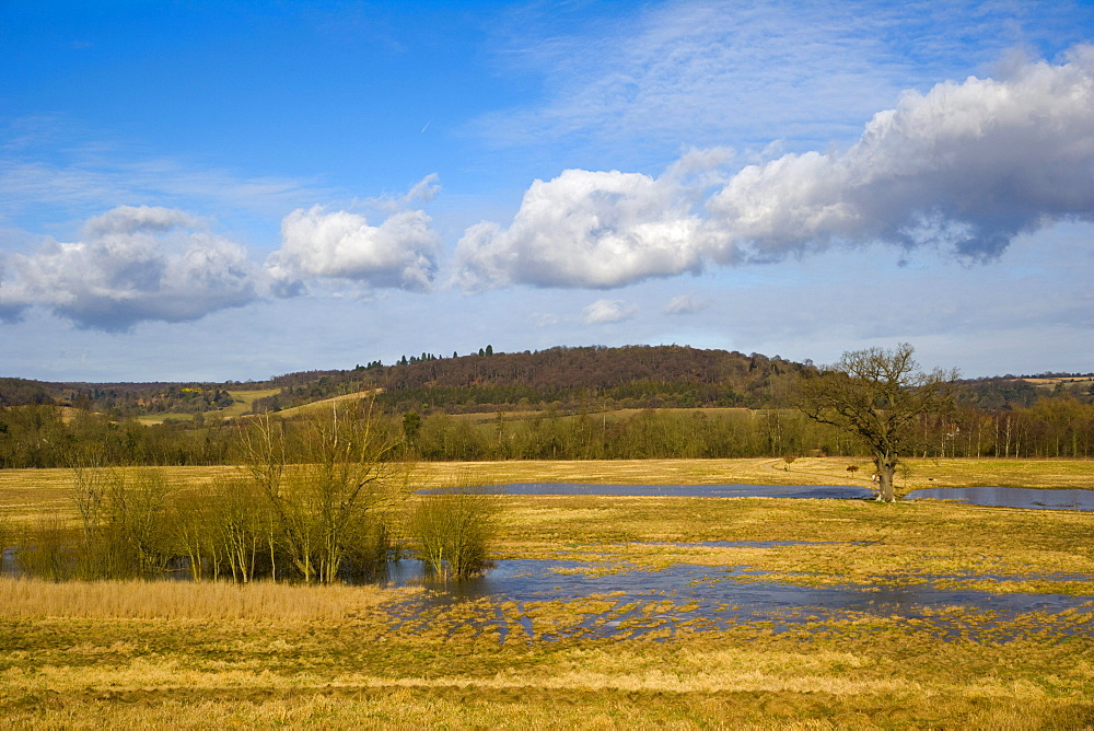 Flooded meadow by Thames downstream of Henley-on-Thames, Oxfordshire, England, United Kingdom, Europe