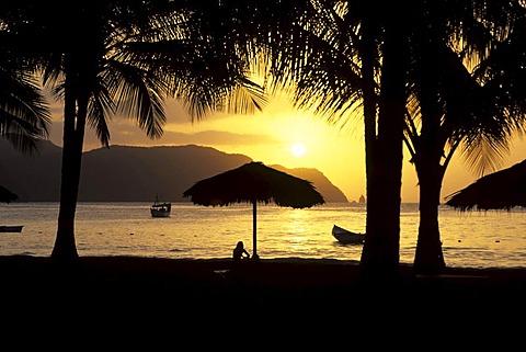 Sunset under palm trees, Playa Medina beach on the Caribbean coast near Carupano, Sucre, Venezuela, Caribbean Sea, South America