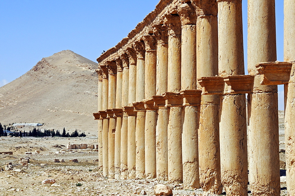 Row of columns in the ruins of the Palmyra archeological site, Tadmur, Syria, Asia