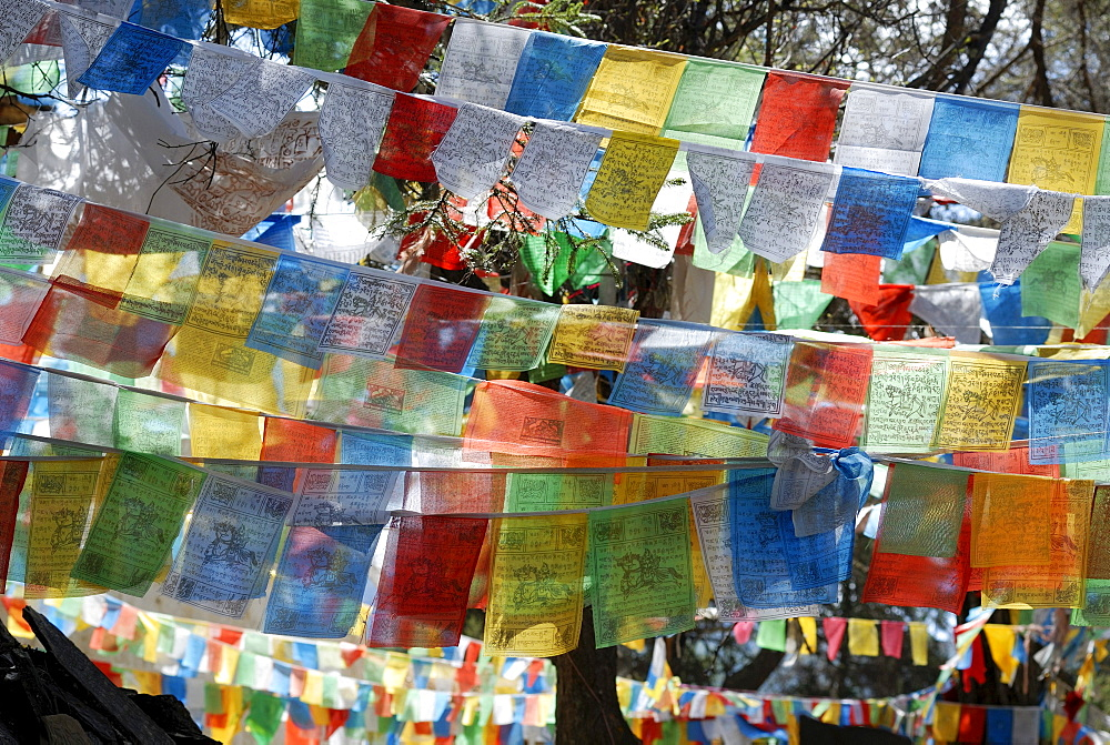 Colorful Tibetan prayer flags with printed prayers and Mandalas in the woods of the monastery Ringa, Yuennan, Eastern Tibet, China, Asia