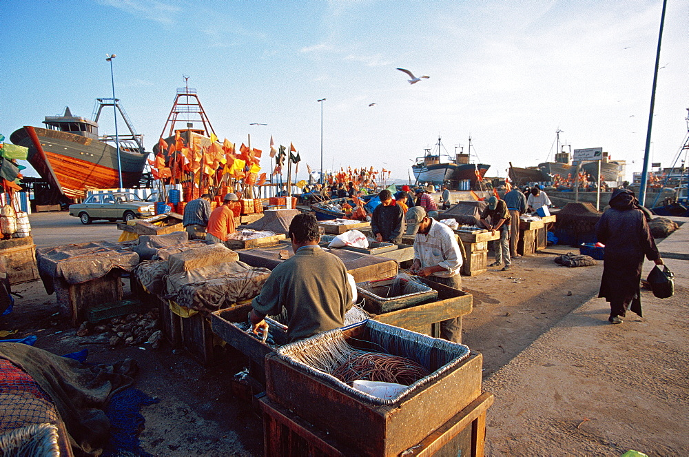 Fishermen in the harbour of Essaouira, Morocco, North Africa