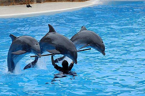 Dolphin show, Loro Parque, Puerto de la Cruz, Tenerife, Canary Islands, Spain