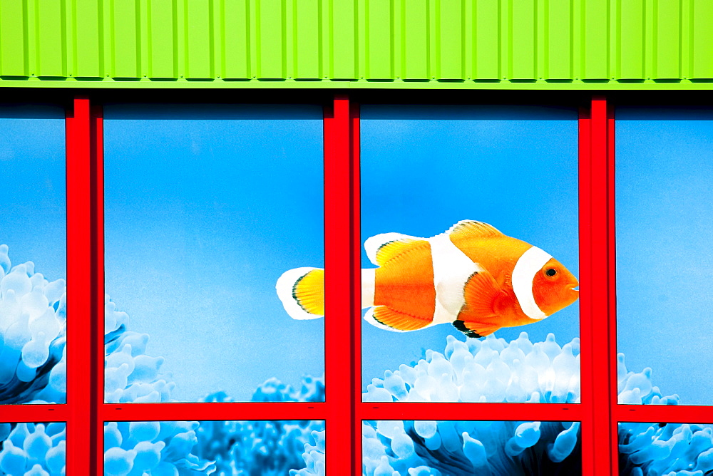 Clown fish in the window of a store of the Fressnapf Tiernahrung GmbH company Neutraubling GmbH, Bavaria, Germany, Europe