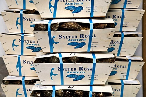 Boxed Sylter Royal oysters, Dittmeyer's Austern-Compagnie, List, Sylt Island, North Frisia, Schleswig-Holstein, Germany, Europe