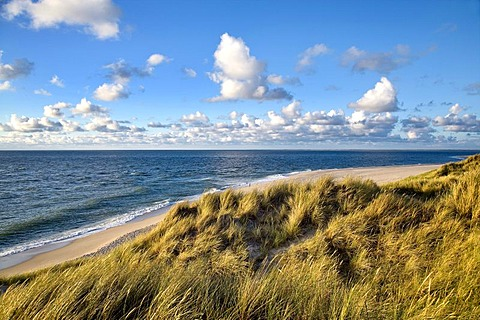 Dunes on Lister Ellenbogen, north-western edge of the island, Sylt Island, North Frisia, Schleswig-Holstein, Germany, Europe