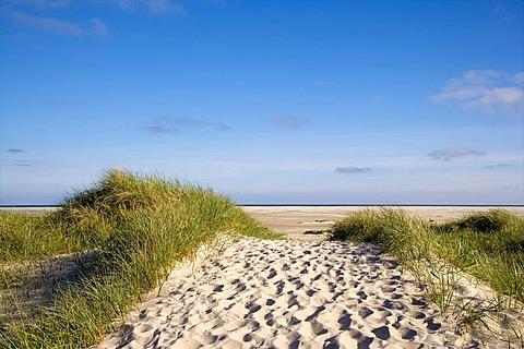 Dunes near Wittduen, Amrum, North Frisia, Schleswig-Holstein, Germany, Europe