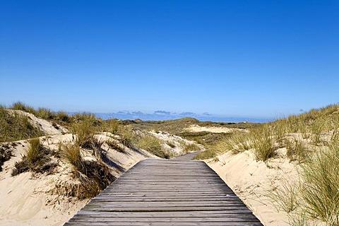 Dunes near Norddorf, Amrum, North Frisia, Schleswig-Holstein, Germany, Europe