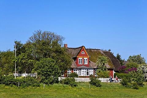 Frisian house in Steenodde, Amrum, North Frisia, Schleswig-Holstein, Germany, Europe