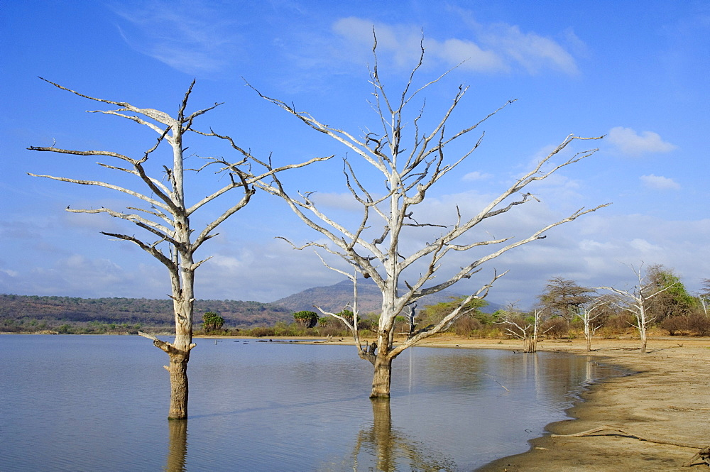 Lake Tagalala with dead trees, Selous Game Reserve, Tanzania, Africa