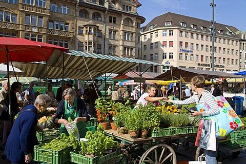 Customers at a market stall, herbs, market, Marktplatz Square, Basel, Switzerland