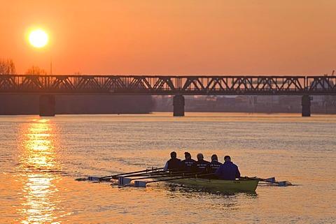 Rowing boat on Main River, sunset, Frankfurt, Hesse, Germany, Europe