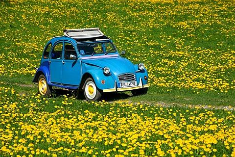 """""""Dolly"""" Citroen 2CV in dandelion Field"""