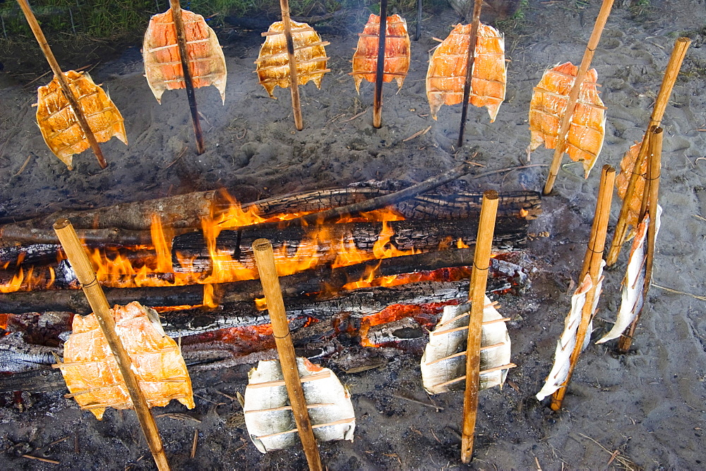 Traditional Indian way of grilling fish, Neah Bay, Makah Indian Reservation, Olympic Peninsula, Washington, USA