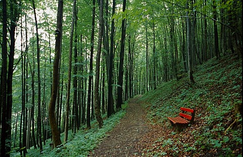 Red bench next to a forest path in a summer green beech forest, way in the Kalkalpen National Park, Upper Austria, Europe