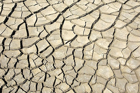 Dried out earth, Camargue, Provence, Southern France, France, Europe - 832-245951