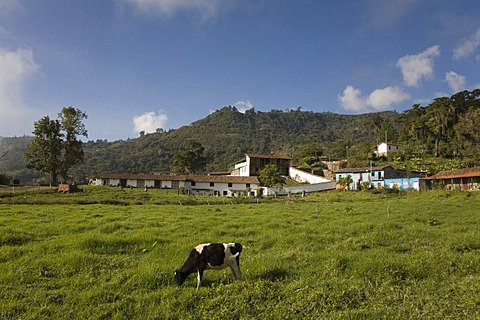 Hacienda El Carmen, Jaji, Andes, Venezuela, South America
