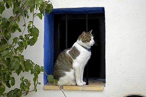 cat sits in a window opening, Altea, Costa Blanca, Spain