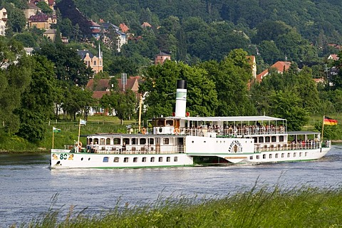 Villas on the shore of the river Elbe near Loschwitz, paddle wheel steamer, Dresden, Saxony, Germany