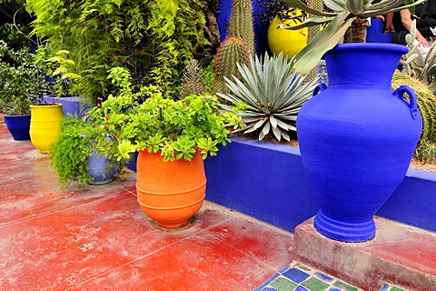 Jardin Majorelle, Marrakech, Morocco, Africa - 832-250118
