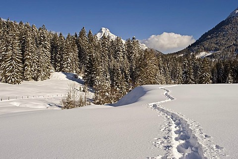 Snow-covered winter landscape with snow shoe tracks and Guffert mountain, Achenkirch, Tyrol, Austria