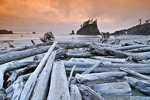 Tree trunks washed up on the beach, Rialto Beach, Mora, Olympic National Park, Washington, USA, North America