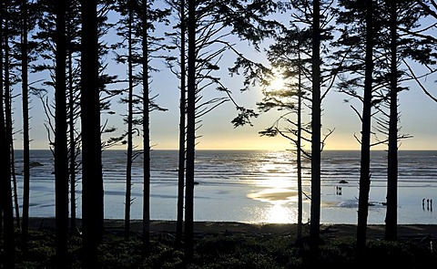 View of Rialto Beach near Mora through a forest, Olympic National Park, Washington, USA, North America