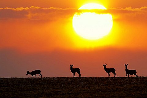 Deers in front of a sunset, photo composition