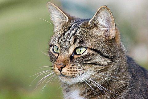 cat - 832-25570