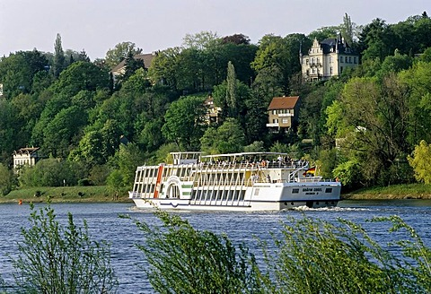 Tour boat on the Elbe river near Loschwitz, old villas along the riverbanks, Dresden, Saxony, Germany, Europe