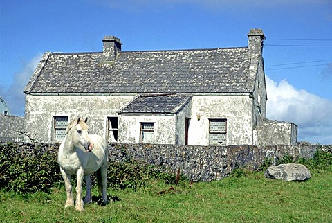 A gray horse in front of a gray stone cottage, Inishmore, Aran Islands, Ireland