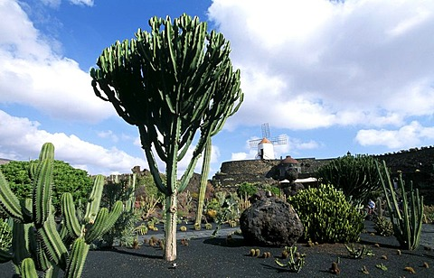 Jardin de Cactus in Guatiza, Lancarote, Canary Islands, Spain, Europe