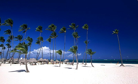 Palm beach on the Playa Bavaro, Punta Cana, Dominican Republic, Caribbean