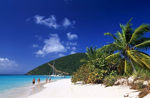 Palm trees on a beach, White Bay, Jost Van Dyke Island, British Virgin Islands, Caribbean