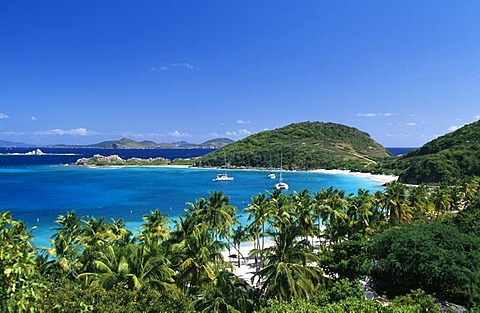 Palm trees on a beach on Peter Island, British Virgin Islands, Caribbean