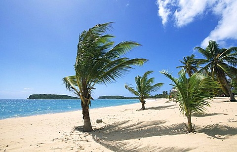 Beach with palm trees, Sun Bay Beach, Vieques Island, Puerto Rico, Caribbean