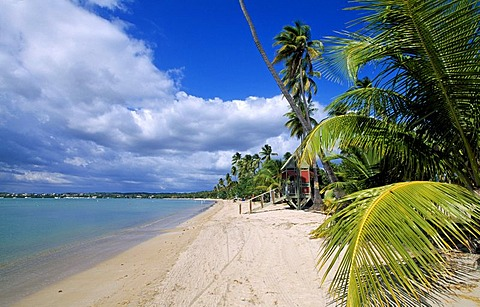 Beach with palm trees, Boqueron Beach, Puerto Rico, Caribbean