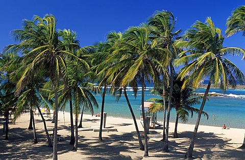 Beach with palm trees, Escambron Beach, San Juan, Puerto Rico, Caribbean