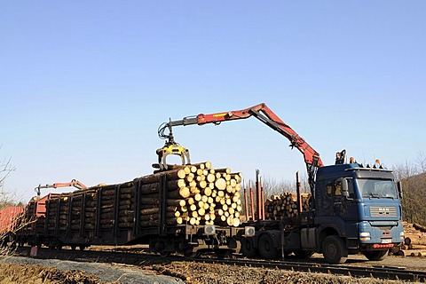 Wind breakage from the Kyrill hurricane being loaded from a truck onto a train, Wittgenstein, North Rhine-Westphalia, Germany