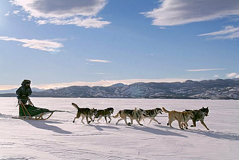 dogteam with musher, Lake Laberge, Yukon Territory, Canada