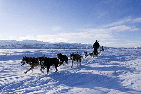 Dog sled team with musher, Lake Laberge, Yukon Territory, Canada