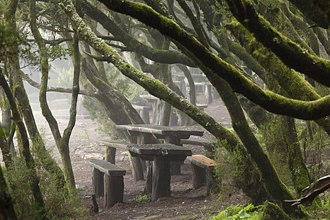 Laguna Grande resting place in a cloud forest, Garajonay National Park, La Gomera, Canary Islands, Spain, Europe