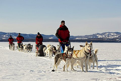 Men, mushers with dog sleds, teams of sled dogs, Alaskan Huskies, frozen Lake Laberge, Yukon Territory, Canada