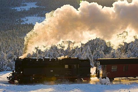 Harz narrow-gauge railroad in a wintery forest, steam engine, Brocken, Blocksberg, Harz National Park, Saxony-Anhalt, Germany, Europe