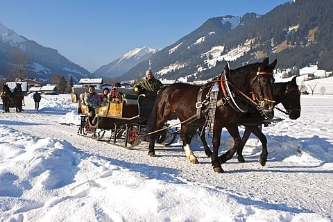 Horses pulling a sleigh between the towns of Ehrwald and Lermoos, Tyrol, Austria, Europe