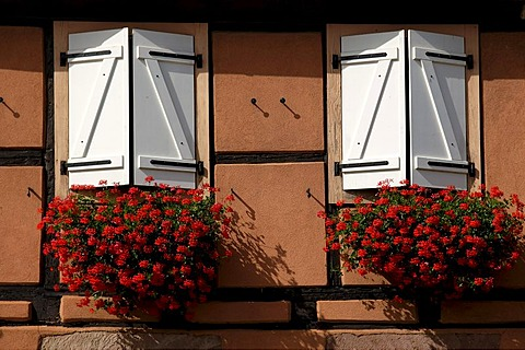 Windows with flower boxes, Colmar, Alsace, France, Europe
